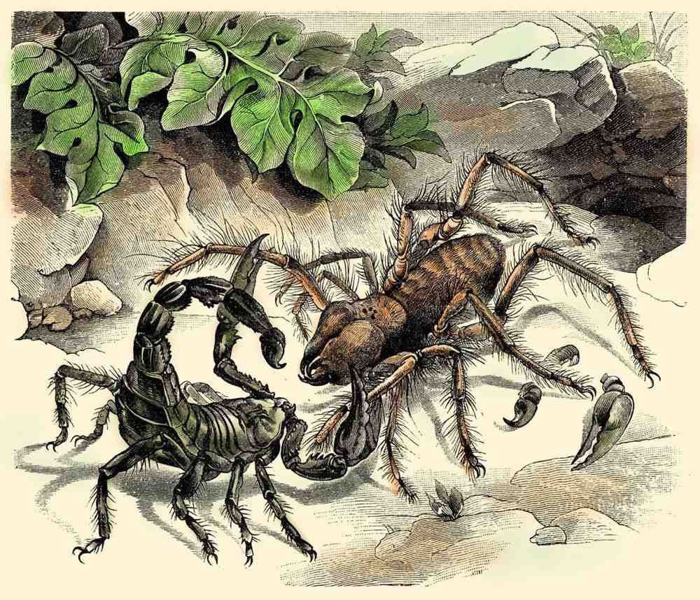Facts about Camel Spiders
