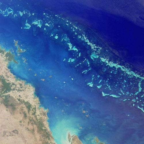 The largest animal-made structures: The Great Barrier Reef