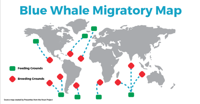 Blue Whale Migratory Map