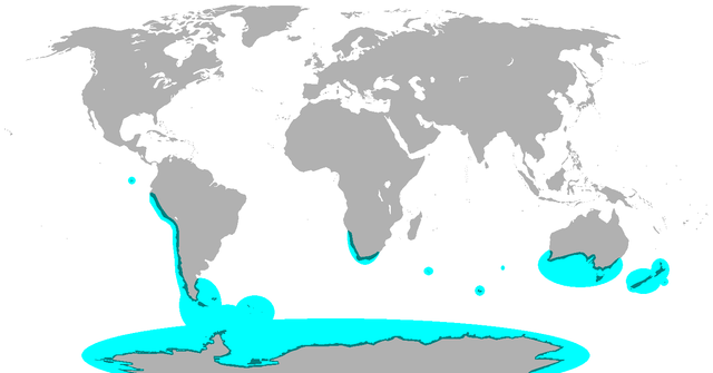 Locations of penguins