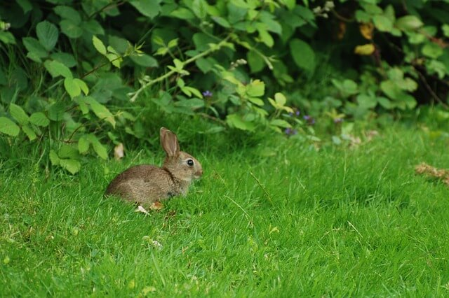 Facts about Wild Rabbits