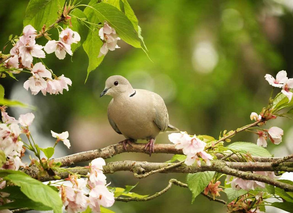 Birds are important for our planet.