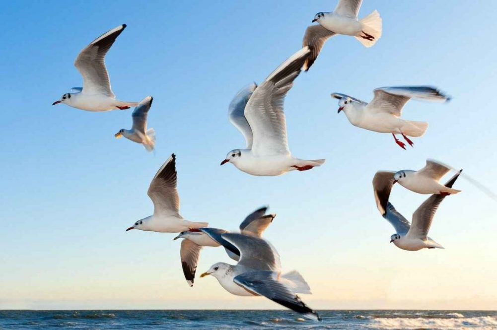 Reasons why birds are important to our planet