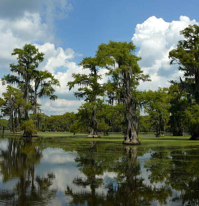 A picture of Caddo Lake