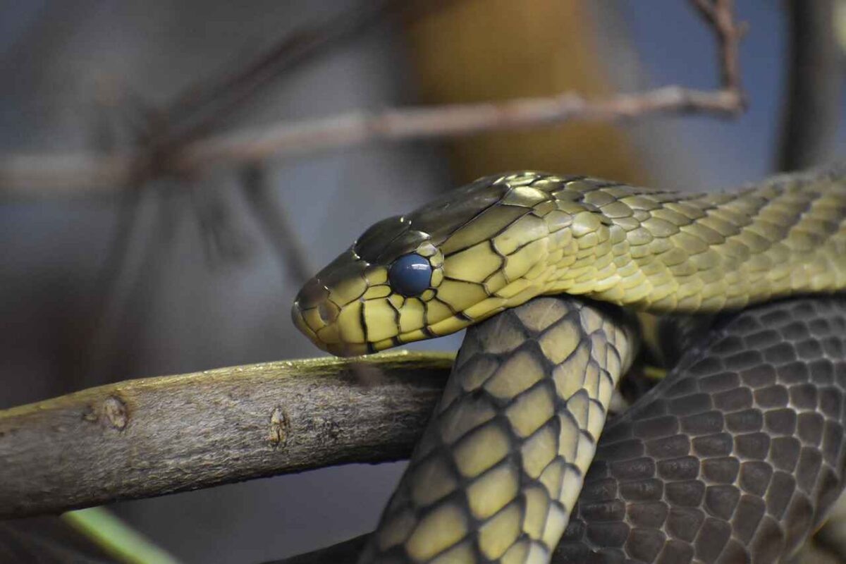 The most poisonous snakes in the world